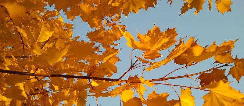 żółty jesienny liść i żółty rowerowy szlak