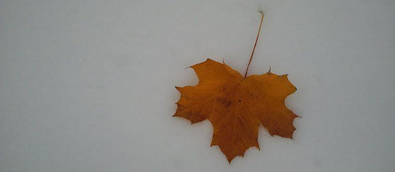 Zima mrozi zima grozi nie dowozi w zaspach tkwi …